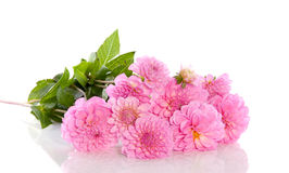 A bouquet of pink Dahlia flowers Royalty Free Stock Photography