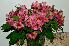 Bouquet of Pink Day Lily Blossoms Stock Image