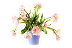 Bouquet pink double tulips Royalty Free Stock Photos