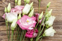 Bouquet of pink eustoma flowers Stock Image