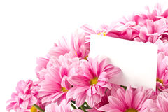 Bouquet of pink flowers Royalty Free Stock Image