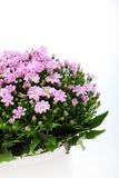 Bouquet of pink flowers Royalty Free Stock Photos