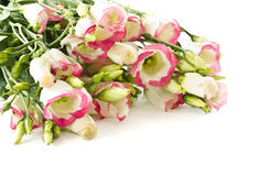 Bouquet of pink flowers lisianthus Stock Image