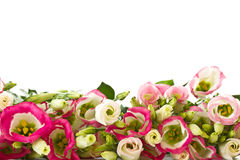 Bouquet of pink flowers lisianthus Royalty Free Stock Photos