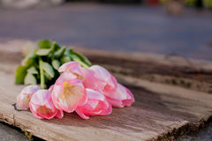 Bouquet of pink flowers Stock Images