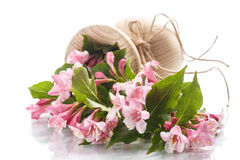 Bouquet of pink flowers Stock Photos