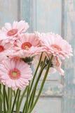 Bouquet of pink gerbera daisies Royalty Free Stock Photos