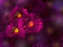 Bouquet of pink gerbera flowers on violet background. Bouquet of pink gerbera flowers on dark purple background.  Floral glooming design.  Place for text stock photos