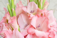 Bouquet of pink gladioli. Royalty Free Stock Photography
