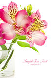 Bouquet of pink lilies. Bouquet of pink roses on white background Royalty Free Stock Photos