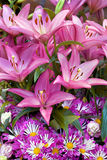 Bouquet of pink lilies and gerberas. Royalty Free Stock Photos
