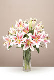 Bouquet of pink lilies Stock Photos