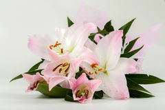 Bouquet of pink lily flower Stock Photos