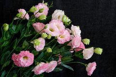 A bouquet of pink Lisianthus. A bouquet of delicate and beautiful pink Lisianthus, dark cloth background Royalty Free Stock Photography