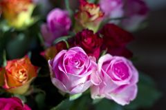 Romantic bouquet of Pink and orange roses. Bouquet of Pink and orange roses stock photography