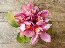 Pink orchid on wooden background Royalty Free Stock Photography