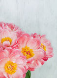 Bouquet of pink peonies Royalty Free Stock Photo
