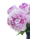 Bouquet of pink peonies Royalty Free Stock Images