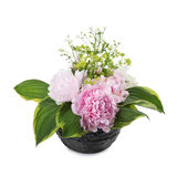 Bouquet of pink peonies Stock Image