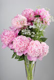 Bouquet of pink peonies Stock Photography