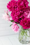 Bouquet of pink peonies in vase Royalty Free Stock Images