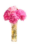 Bouquet of pink peonies in the vase Royalty Free Stock Photography