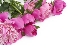 Bouquet of pink peonies on a white table Royalty Free Stock Images