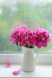 Bouquet of pink peonies on a windowsill Stock Photos