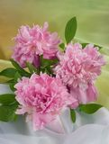 Bouquet of pink peony Stock Image