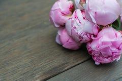 Bouquet of pink peony. Stock Photos
