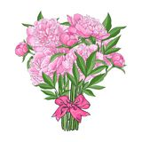Bouquet of pink peony flowers tied with ribbon. Bunch, bouquet of pink peony flowers tied up with ribbon, sketch style, hand drawn vector illustration isolated Stock Photography