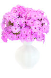 Bouquet of pink phlox in a ceramic vase Royalty Free Stock Image