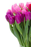 Bouquet of  pink and purple  tulip flowers Royalty Free Stock Photos