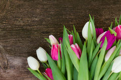 Bouquet of  pink, purple and white  tulips Royalty Free Stock Photography