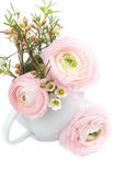 Bouquet of pink ranunculus Royalty Free Stock Photography