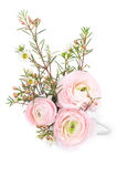 Bouquet of pink ranunculus Royalty Free Stock Photo