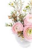 Bouquet of pink ranunculus Stock Photo