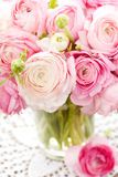 Ranunculus Royalty Free Stock Images
