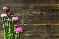 Bouquet of Pink Ranunculus, Buttercup Flowers Royalty Free Stock Photos