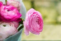 Bouquet of Pink Ranunculus, Buttercup Flowers Stock Photos