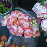 Bouquet of pink ranunculus Stock Images