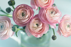 Bouquet of pink ranunculus in vase Stock Images