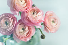 Bouquet of pink ranunculus in vase Royalty Free Stock Photos