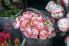 Bouquet of pink ranunculus Royalty Free Stock Images