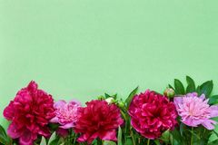 Bouquet of pink and red peonies on green background. Copy space, top view. Mothers Day, Birthday concept stock photos