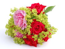 Bouquet of Pink and Red Roses. Surrounded by lady's mantle flowers Royalty Free Stock Photo