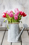 Bouquet of pink and red tulips Royalty Free Stock Photos
