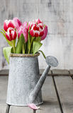 Bouquet of pink and red tulips Royalty Free Stock Photography