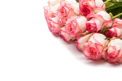 Bouquet of pink rose flowers on white background. Stock Photos