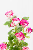 Bouquet of pink rose flowers Stock Photo